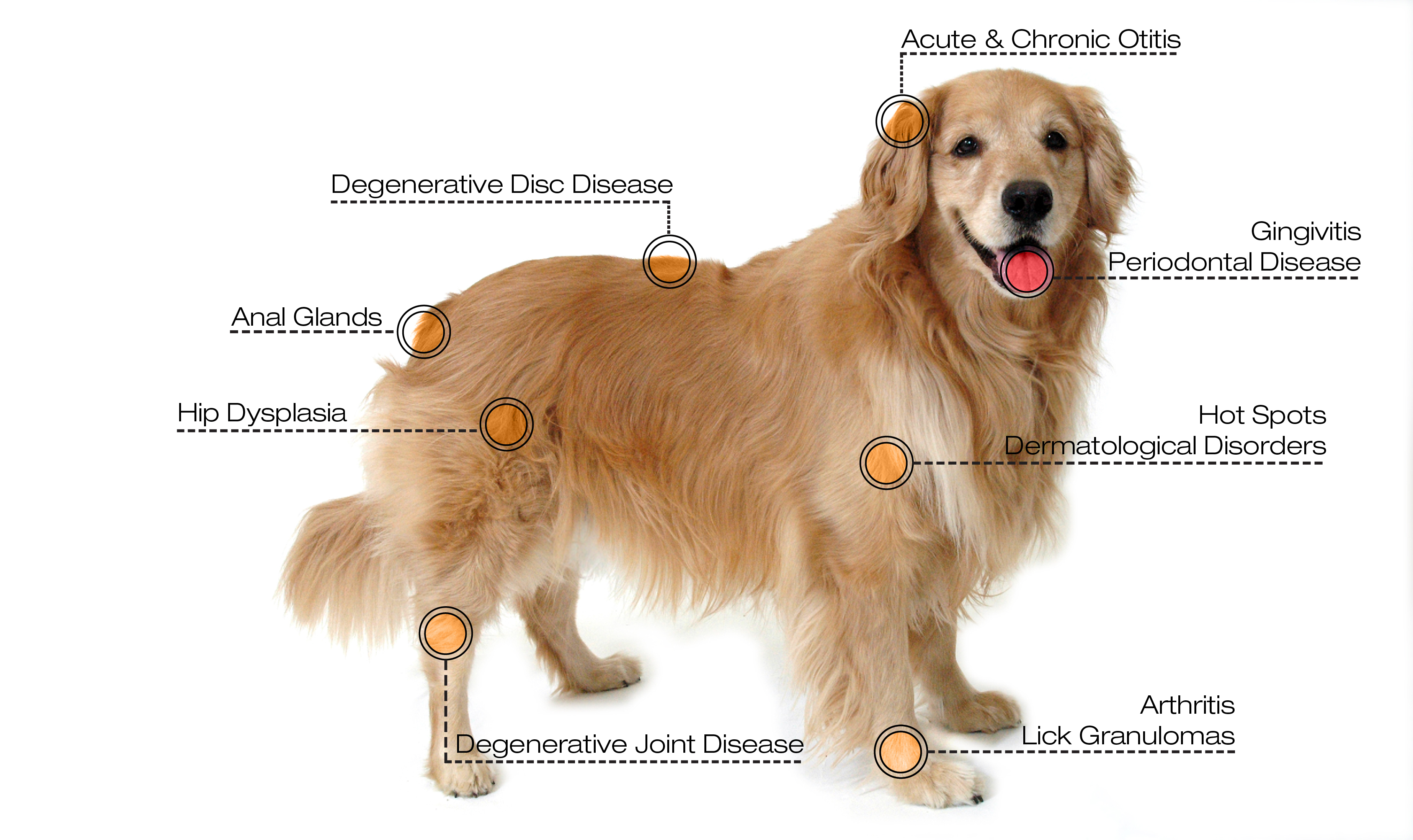 dog laser diagram